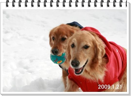 6,29 2009,1,21-2