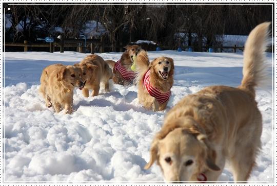 2010,1,4雪遊び7