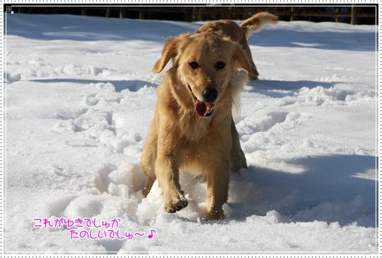2010,1,4雪遊び5
