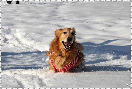 2010,1,4雪遊び4