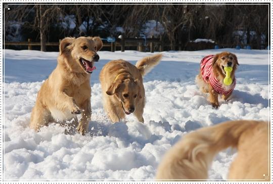 2010,1,4雪遊び8