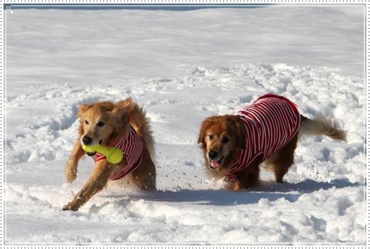 2010,1,4雪遊び19