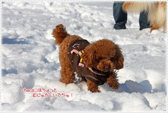 2010,1,4雪遊び9