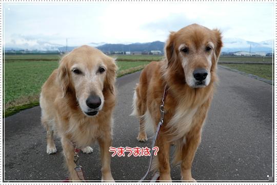 2010,1,9お散歩11