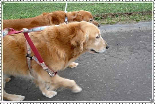 2010,1,9お散歩9