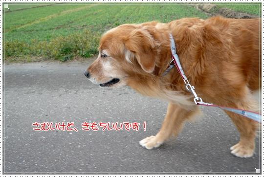 2010,1,9お散歩8