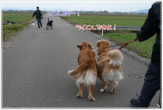 2010,1,10お散歩9