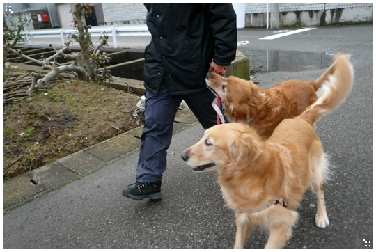 2010,1,10お散歩7