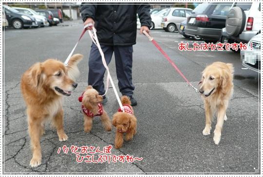 2010,1,10お散歩8