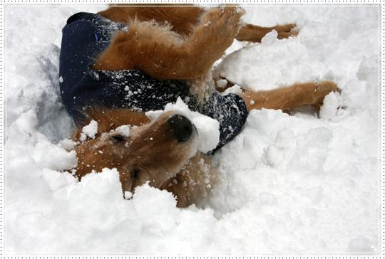 2010,1,14雪遊び6