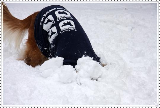 2010,1,14雪遊び5
