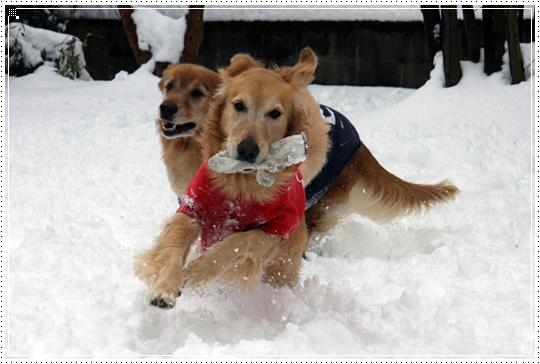 2010,1,14雪遊び4