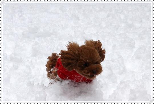 2010,1,14雪遊び11