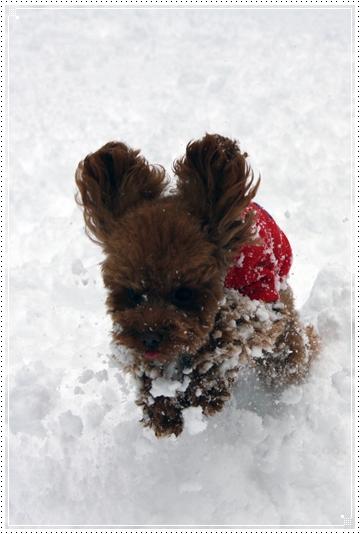 2010,1,14雪遊び10