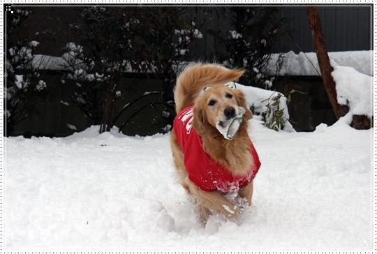 2010,1,14雪遊び15