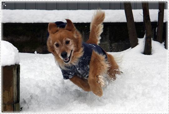 2010,1,14雪遊び14