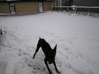 雪0111