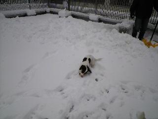 0111雪2