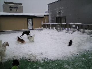 0110雪8