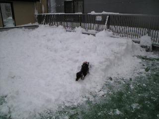 0110雪9
