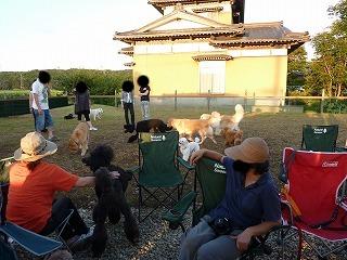 いっぱいの犬