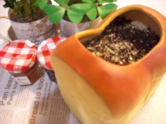BREAD型 サラダ菜 栽培セット3