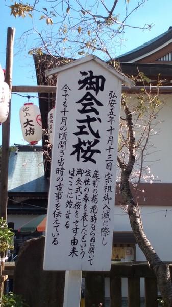 20091014sakura.jpg