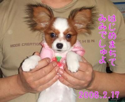 2009103mimi.jpg