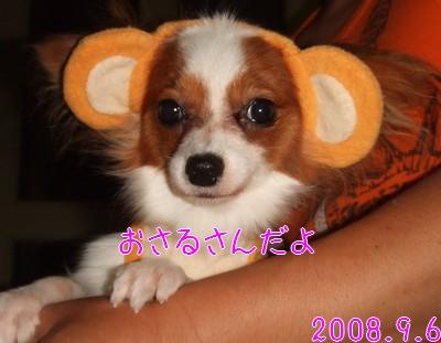 2009103mimi11.jpg