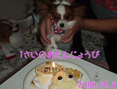 2009103mimi12.jpg