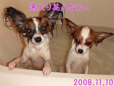 2009103mimi14.jpg