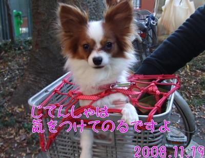 2009103mimi15.jpg