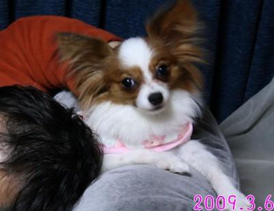 2009103mimi19.jpg