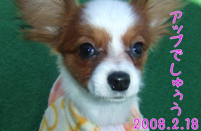 2009103mimi2.jpg