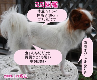 2009103mimi22.jpg