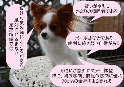 2009103mimi23.jpg