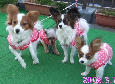 2009103mimi6.jpg