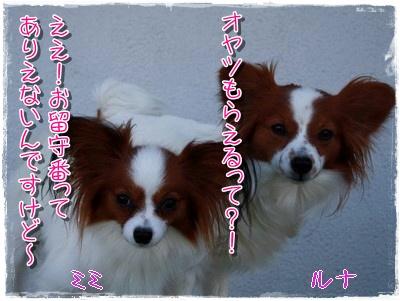 20091092.jpg