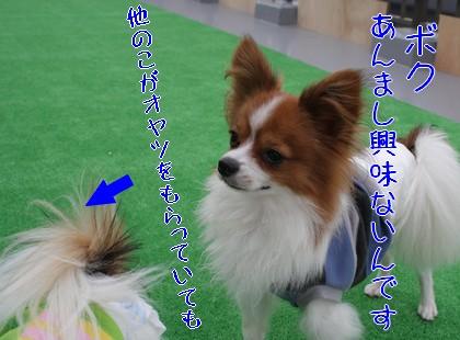 20091113ciao2.jpg