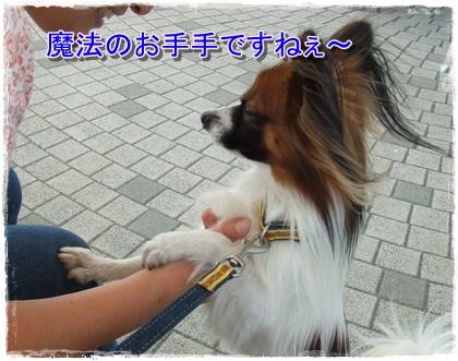 2009111pomasa2.jpg