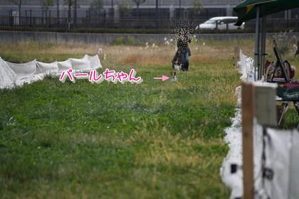 20091213pearl.jpg