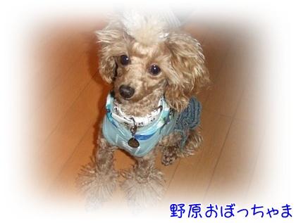 20091217nohara.jpg