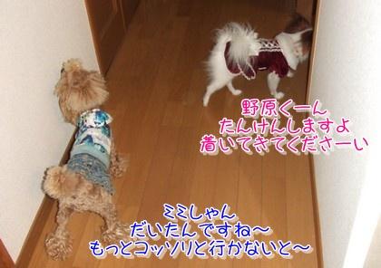 20091217noharamimi.jpg