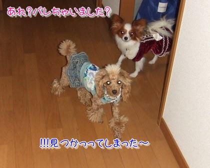 20091217noharamimi1.jpg