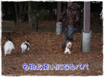 20091219allpapa.jpg