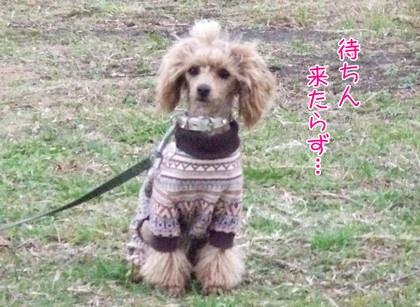 2009125nohara.jpg
