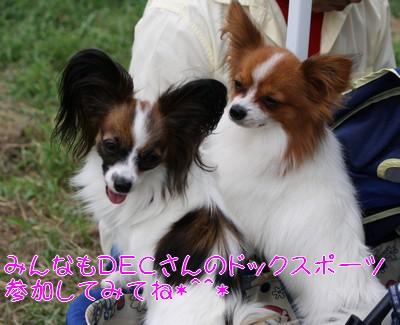 2009921himeciao.jpg