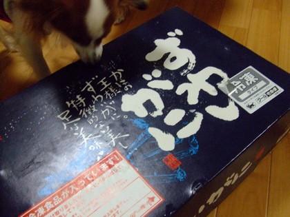 2010111kani.jpg