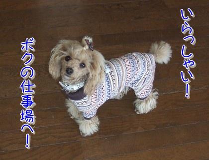 2010112nohara.jpg