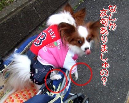 2010214mimi2.jpg